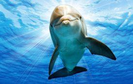 تجربه خاص تماشای دلفینها در برج میلاد