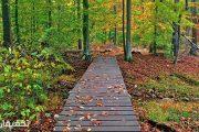با جنگل گیسوم ، رویاییترین جنگل گیلان آشنا شوید