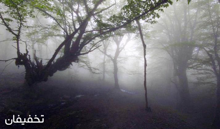 فضای مه آلود جنگل الیمستان