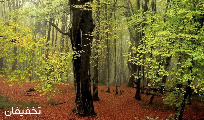 اگر اهل کمپینگ هستید، جنگل الیمستان جلوههای فوق العادهای دارد.