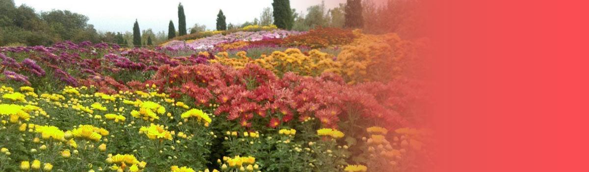 تخفیف باغ گیاهشناسی تهران