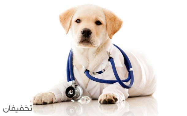دامپزشکی کلینیک دام کوچک