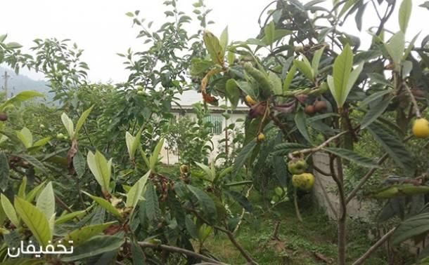 ویلای باغ سیب