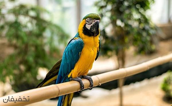 سورپرایز ویژه جشنواره زمستانه باغ پرندگان تا ۵۰% تخفیف
